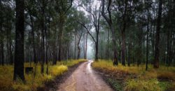 Road leading to Clarence River Wilderness Lodge