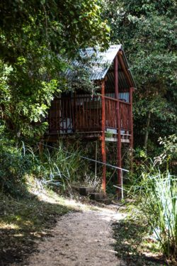 Tree Hut at Clarence River Wilderness Lodge