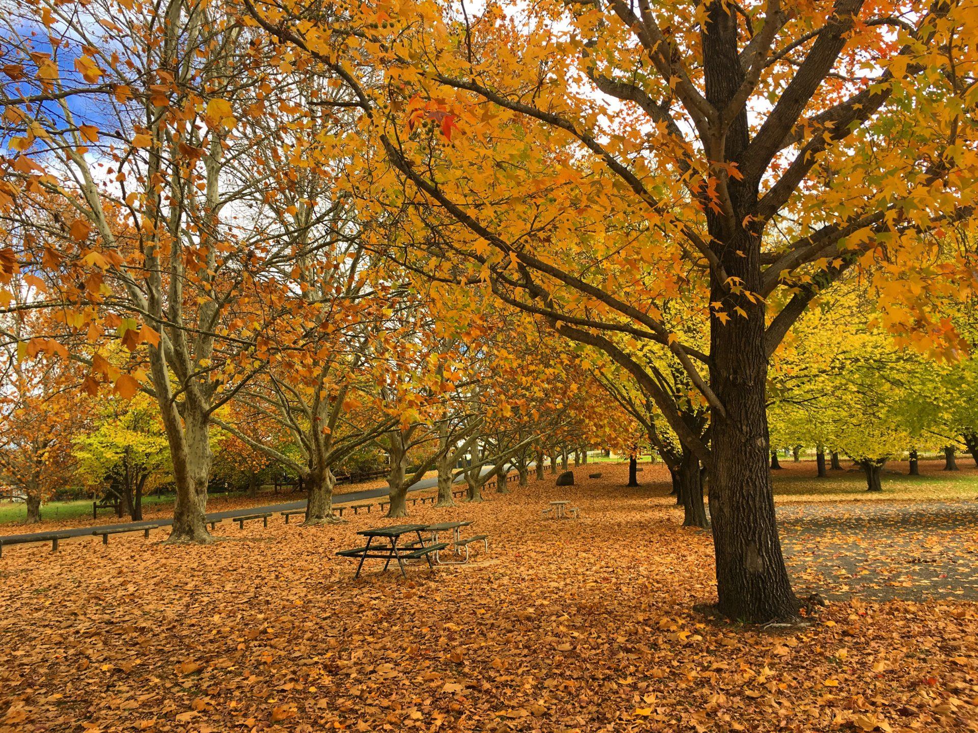Autumn in Millbrook Park
